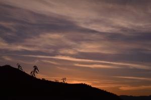 Photograph: Paula Thompson-Fearnley  Andalucia: Spain, June 2014